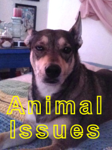 Animal-Issues-Final-for-website