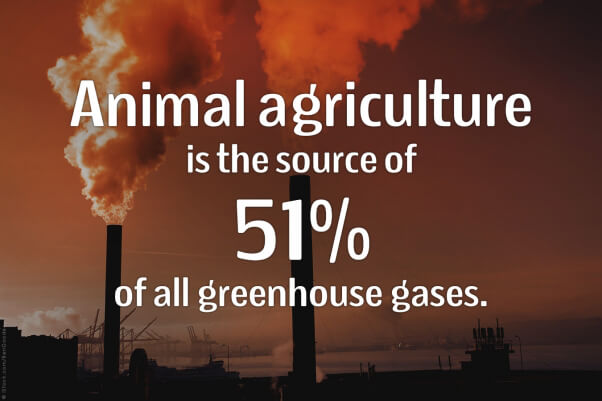 Animal-Agriculture-Source-Greenhouse-Gasses-PETA-602x401