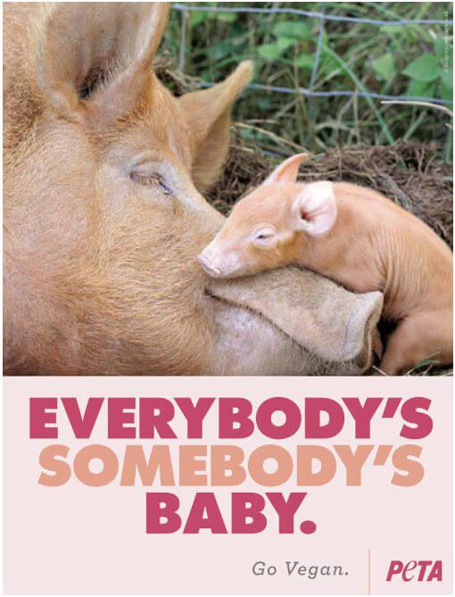 everybodys-somebodys-baby
