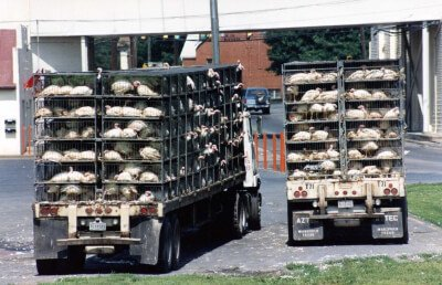 food_trucks_rocco_turkeys_008-400x258