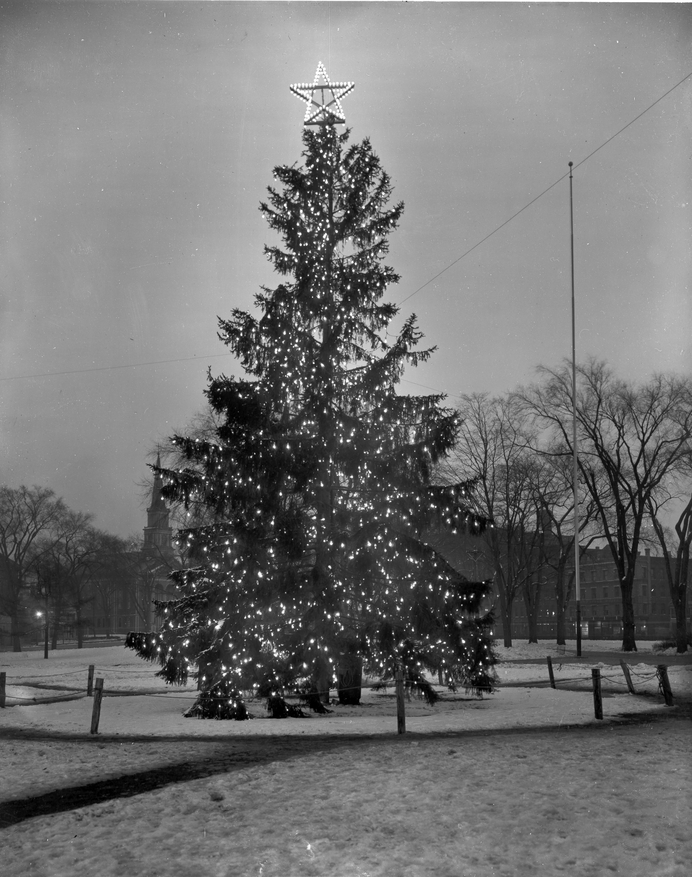 First tree on the Common 1913