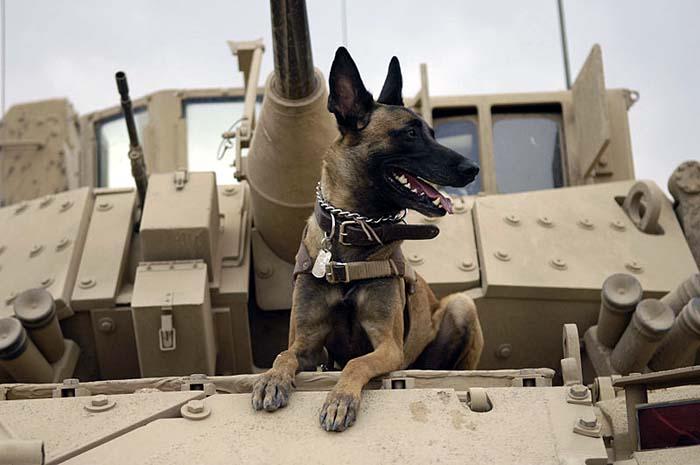 VIETNAM WAR DOG