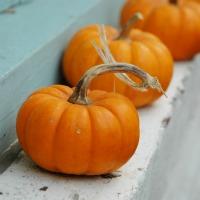 200x200_2D00_pumpkins