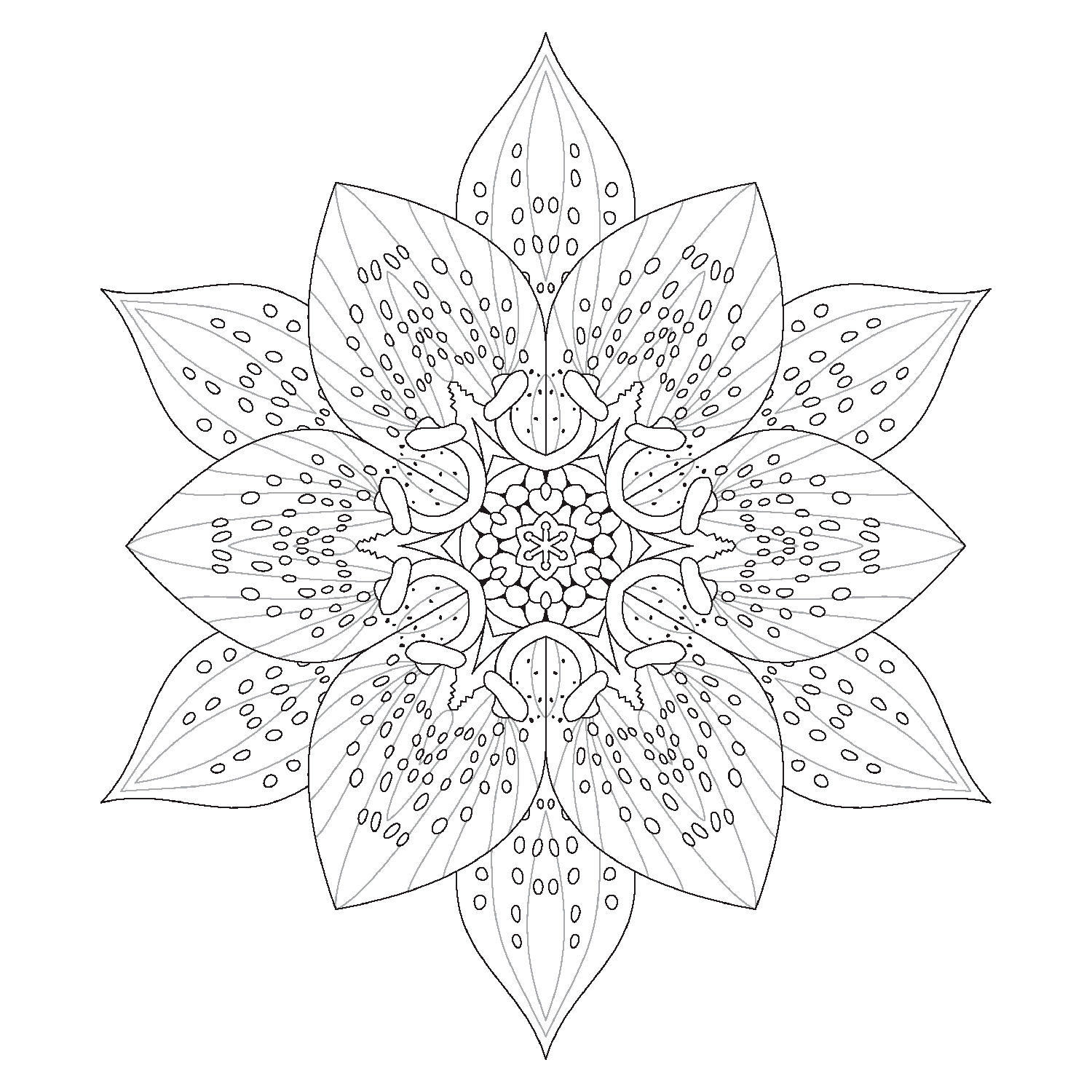 Asiatic Lilly Coloring Page by David Bookbinder
