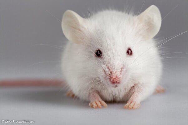 GEN-white+mouse-COI-JO