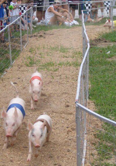 pig_races_wilson_county_fair-400x573