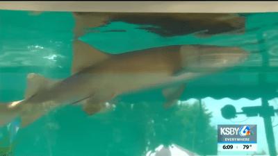 santa_barbara_county_fair_shark_exhibit-400x225