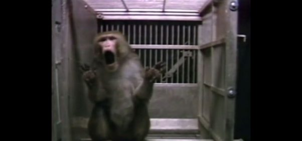 UC-Davis-Monkey-Lab-Redacted-Video-Screenshot-2-602x281