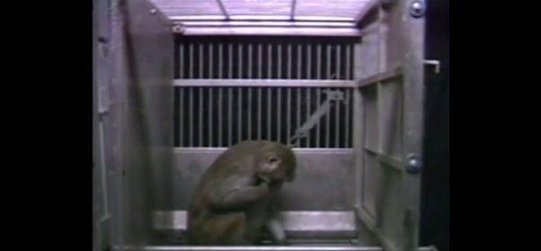 UC-Davis-Monkey-Lab-Redacted-Video-Screenshot-4-602x280