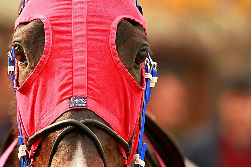 ent_horse_racing_NC_SI_MC