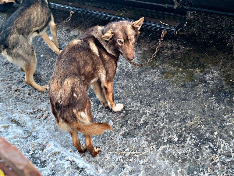 iditarod-dogs-2019-peta-photos-768x576