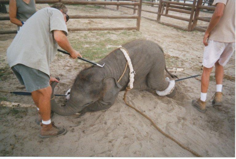 elephant-bullhook-resize-768x517