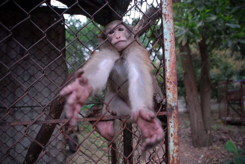Monkey-reaching-out-from-her-cage