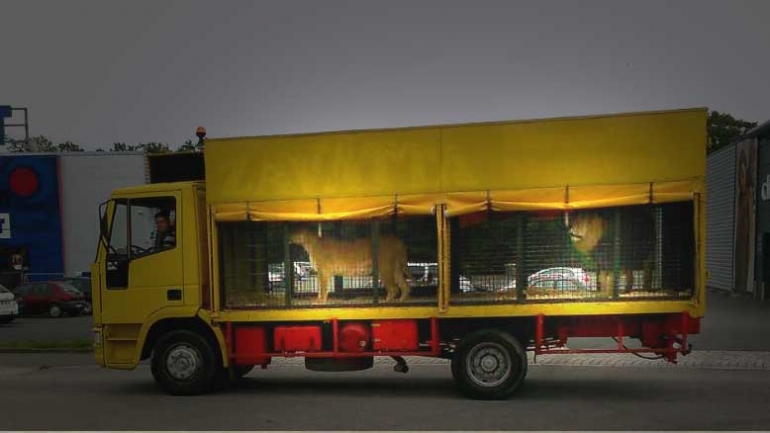 Circus-animals-in-truck-770x433