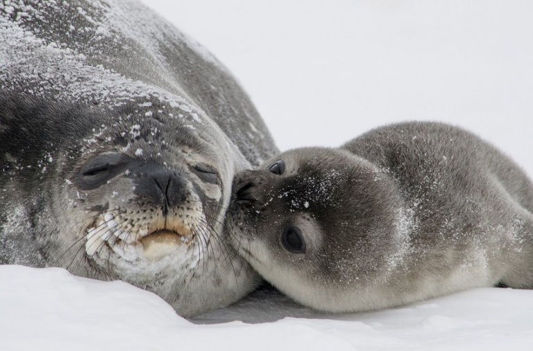 Mama-and-baby-seal-768x507